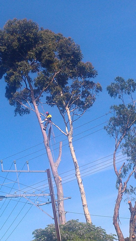 Safety is paramount adelaide affordable tree removal for Affordable landscaping adelaide