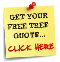 Free Quote - Adelaide's Affordable Tree Removal