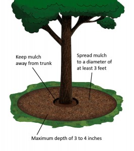 Tree Mulch - Adelaide Affordable Tree Removal