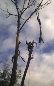 Tree Pruning - Adelaide Affordable Tree Removal